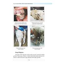 Koyun ve Keçi Hastalýklarý